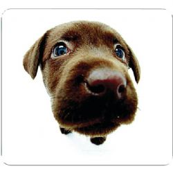 Allsop Chocolate Lab Mouse Pad