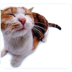 Allsop Pet Me Cat Mouse Pad